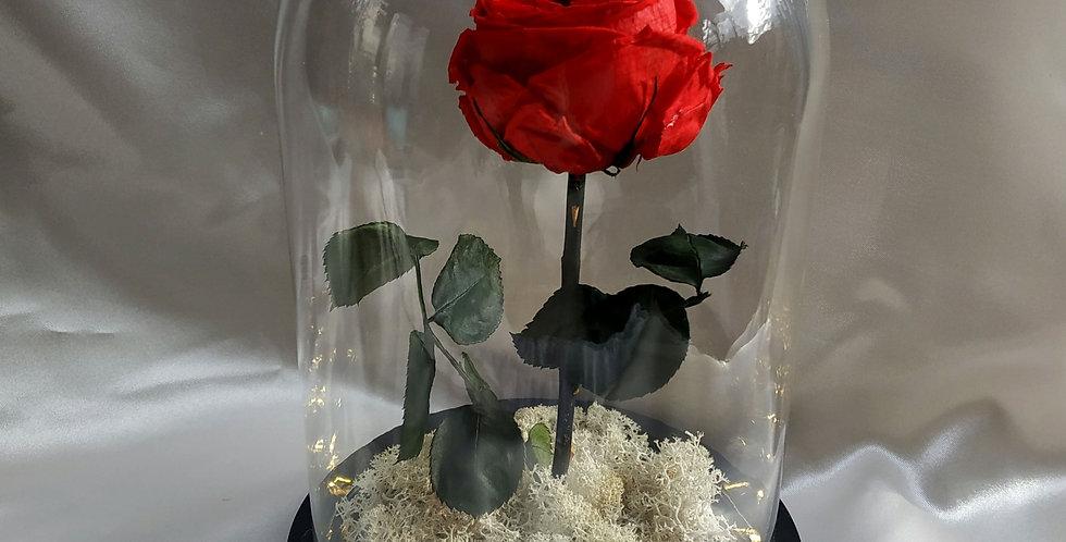 Τριαντάφυλλο eternity rose σε γυάλα με φως LED.