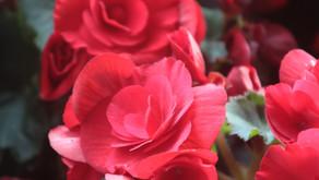 Fragrant as a terpene