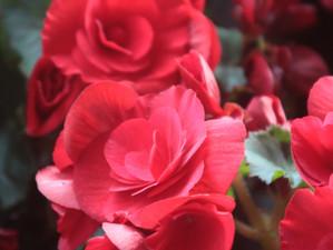 """""""As Flowers Bloom"""""""