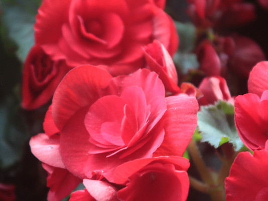 Experience the Scent-sational Effects of Flowers
