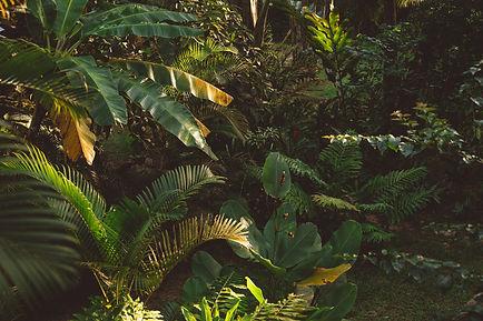 green%20banana%20tree%20during%20daytime