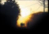 Screen Shot 2019-12-02 at 11-2.png