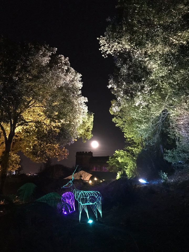 Deer Sculpture at night.jpg