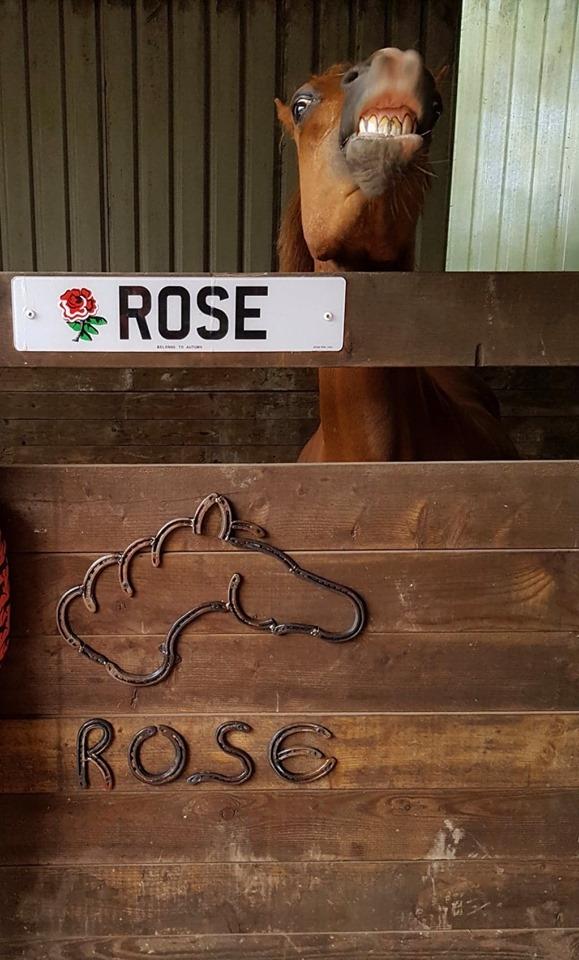 Horse shoe horse