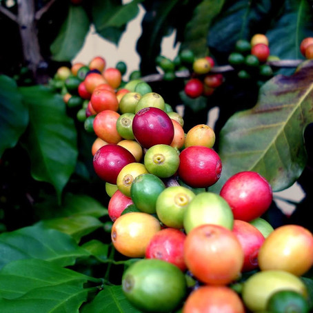 Fair Trade Coffee: Start Your Day Right