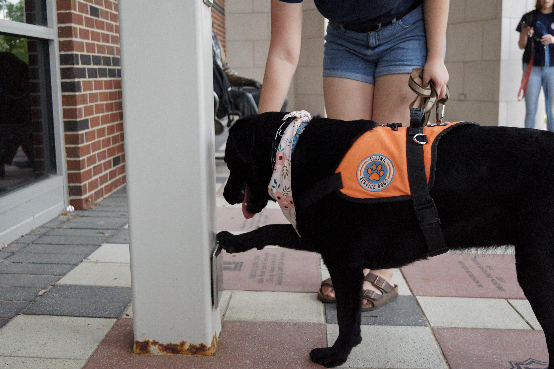 Illini Service Dogs