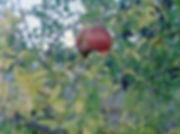 grenade 2.jpg