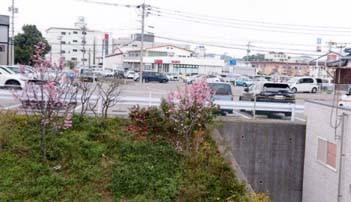 平成年間最後の桜開花
