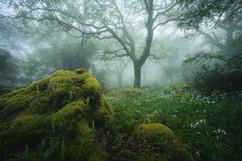 bosque13---Copy.jpg