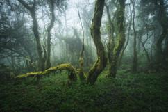 bosque14---Copy.jpg