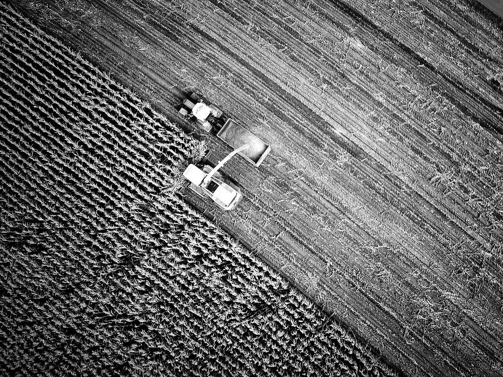 Teren agricol, agricultura, recolta