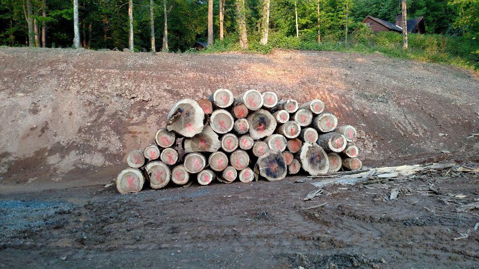Site work / Logs