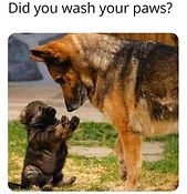 did you wash your paws.jpg