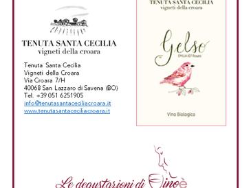 GELSO - EMILIA IGT ROSATO - Tenuta Santa Cecilia - Vigneti della Croara