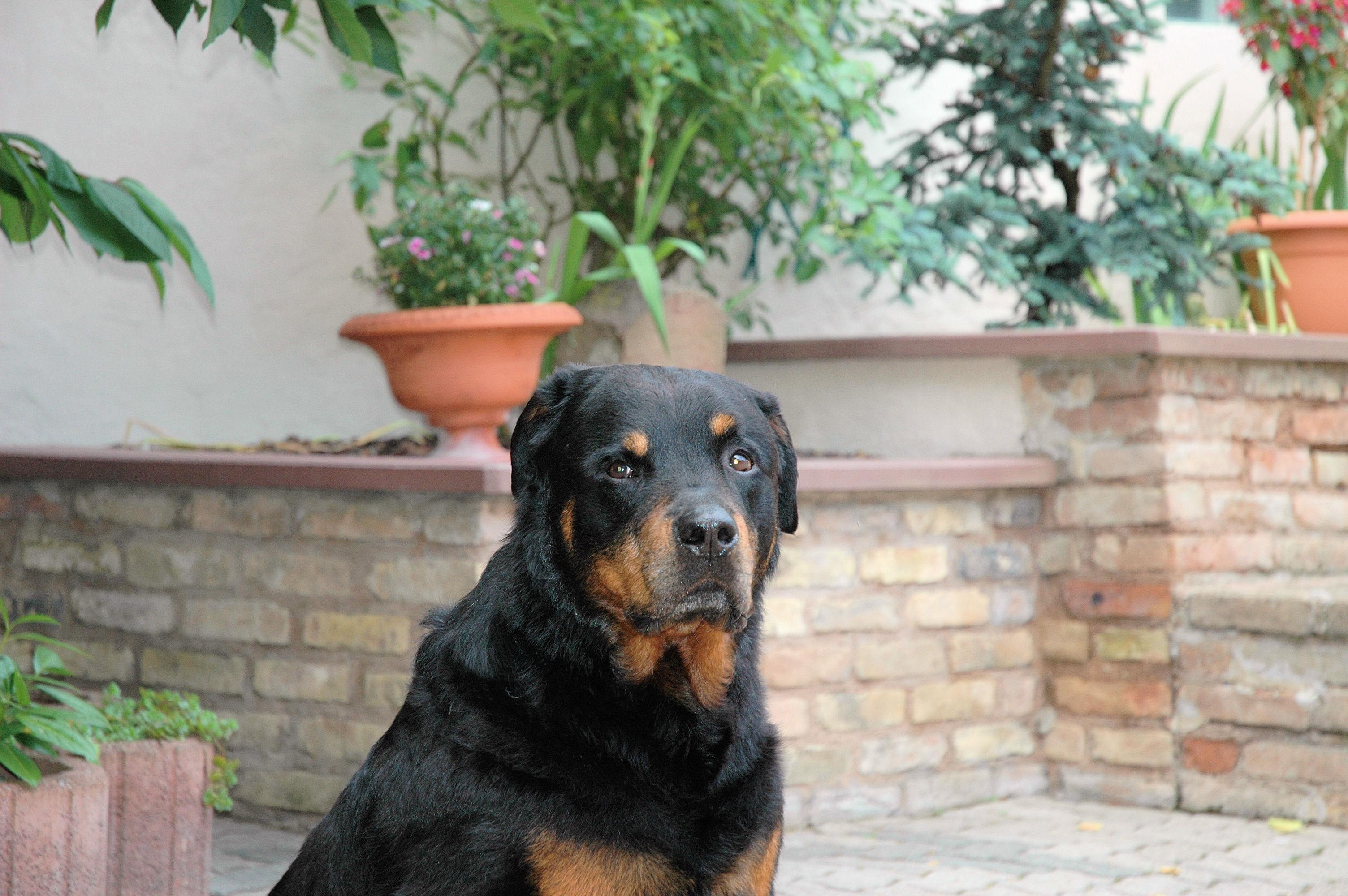 chien1
