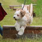 Peggy jumping crop.jpg