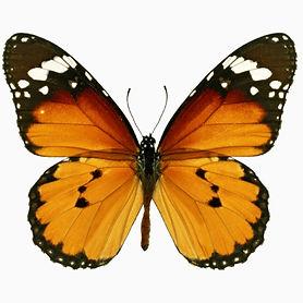 Polymorphic Marketing - Butterfly 1.jpg