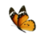 Polymorphic butterfly.png