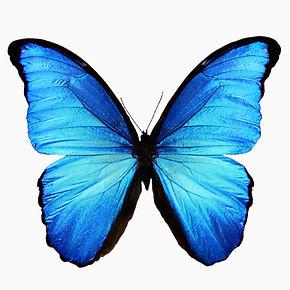 Polymorphic Marketing - Butterfly 2.jpg