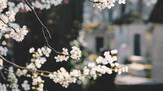 タックス日本語より新年のご挨拶です。税制改正とお願い。
