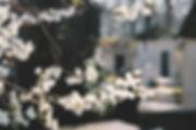 Fleurs blanches et méditation