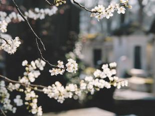 Kutsu kevätkokoukseen 2019