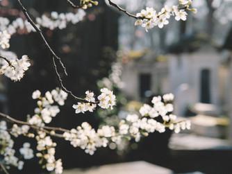 Die Sonne scheint, die Vögel zwitschern, der Frühling ruft...