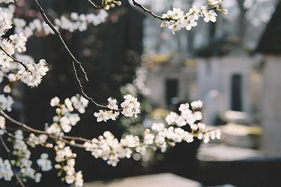 Daylesford Massage White Flowers
