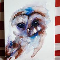 owl, watercolour