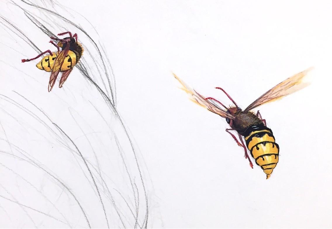 Hornets Detail