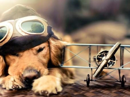 Viajar con mascotas en el tren y avión