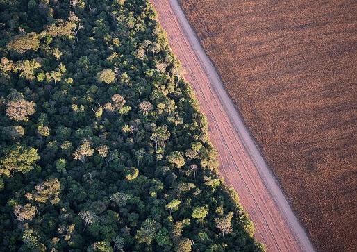 Kunnen biodiversiteit en landbouw hand in hand gaan?