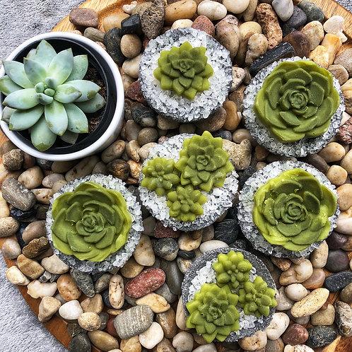 Green Tea + Hemp Succulent Bath Bomb Melt