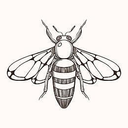 Honey, Honey Bee, Queen bee, Local Honey, Raw Honey