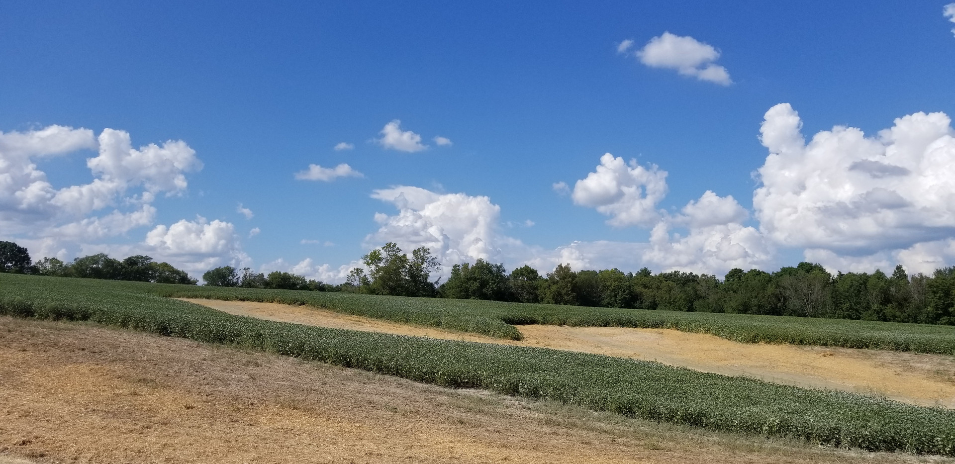 Shelby County Farmland