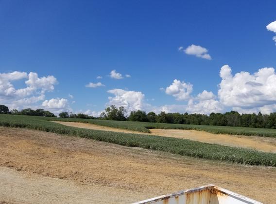 Shelby County Farmland