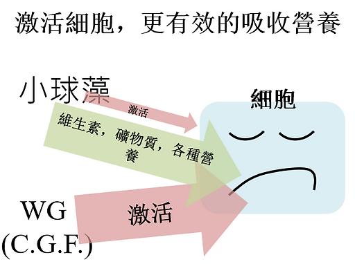 SWGP-c.png