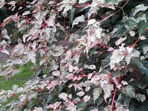 Ursache von Totholz und der wundervollste Privatgarten in Neermoor