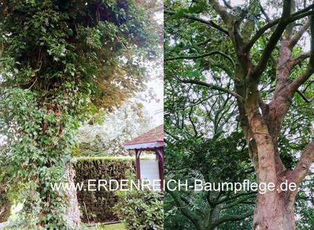 Fremdbewuchs im Baum