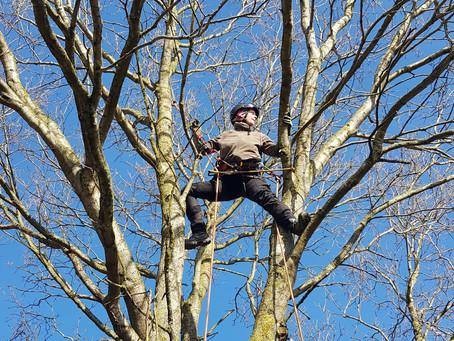 Wie ich zur Baumpflege kam