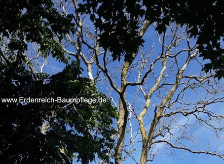 Ein abgestorbener Baum wird zum Habitat