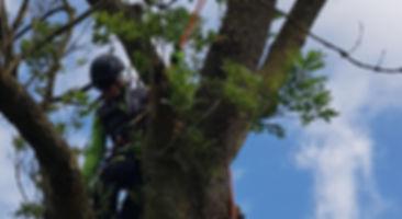 ERDENREICH-Baumpflege Ostfriesland - Tit