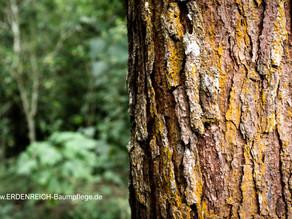 Baumschutzsatzung für Ostfriesland