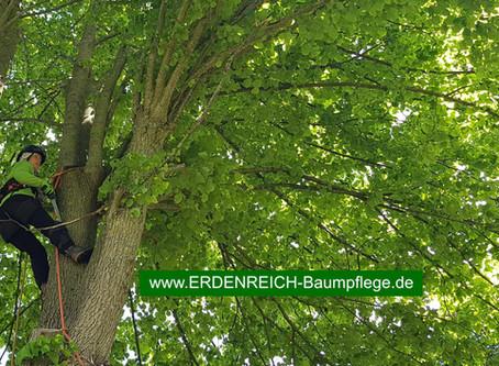 Baumschutz Ostfriesland