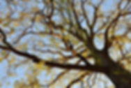 Erdenreich-Baumpflege---Ostfriesland-3.j