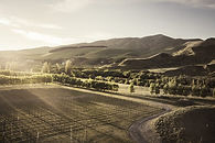 the-boneline-vineyards-900x600.jpg