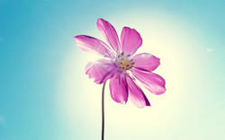 purple_magenta_flower-2560x1600.jpg
