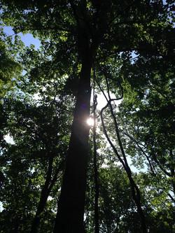 RabunHalf2014Trees