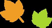 Feuilles simples Maple
