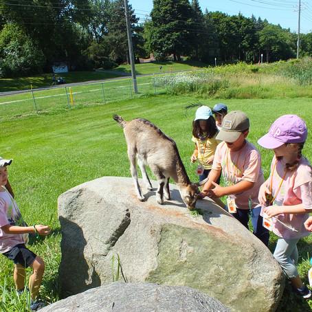 Animal Excursion Week 5 Day 5